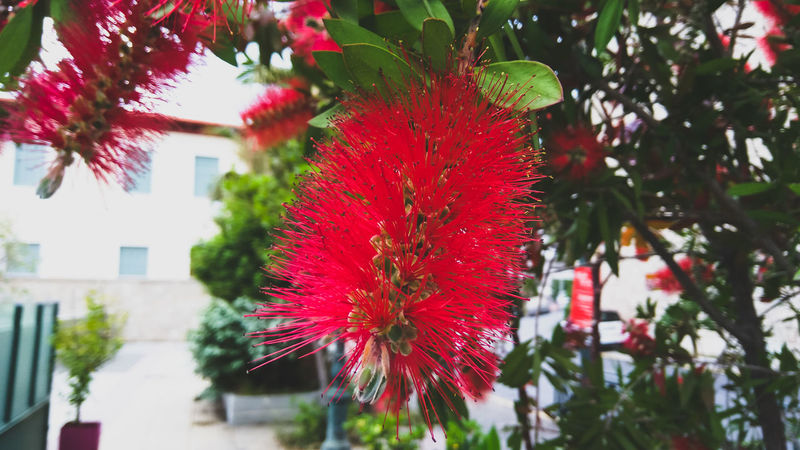 Flower Growth Red Nature Plant Freshness Outdoors No People Day Tree Beauty In Nature Springtime Fragility Close-up Flower Head Red Flower At Its Best Red Flower Red Flowers EyeEm Gallery Nature_collection EyeEm Best Shots Flowers,Plants & Garden Freshness Beauty In Nature Nature