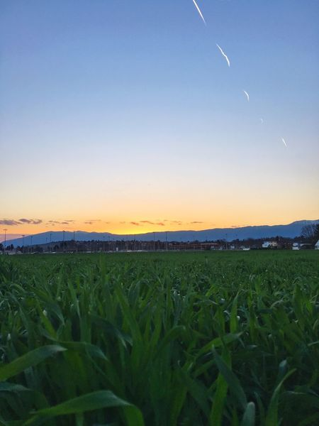 Exploring Geneva Field Agriculture Rural Scene Growth Nature Beauty In Nature Farm Sunset Crop  Tranquil Scene Landscape Tranquility Clear Sky Sky Outdoors No People Flower Tree Day Live For The Story Lost In The Landscape