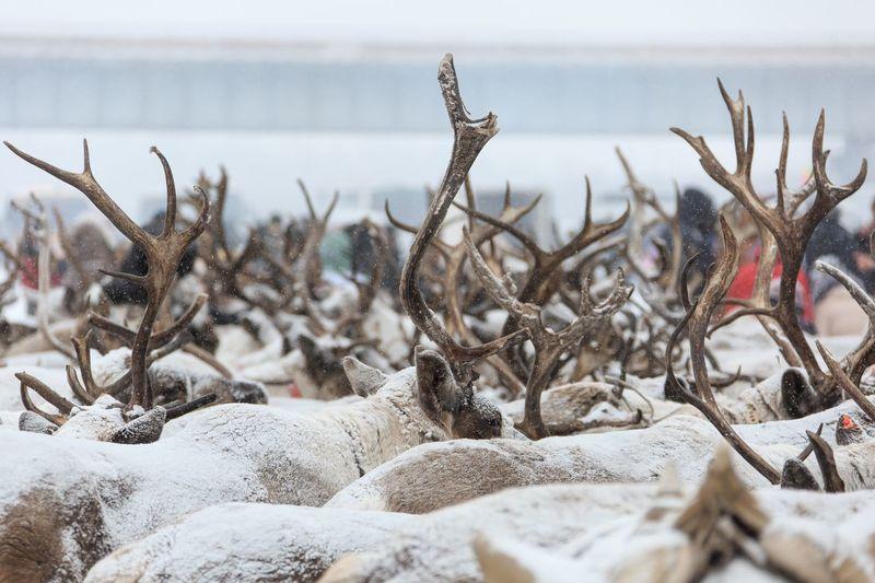 A flock of deer