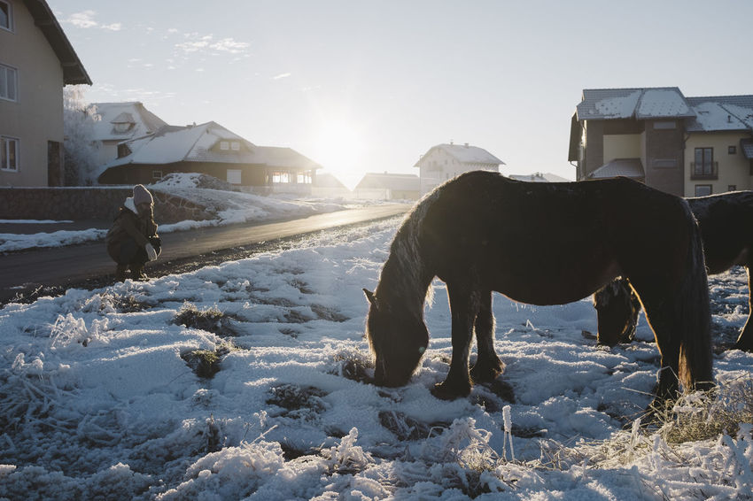 Winter in Serbia Animal Animal Themes Built Structure Cold Temperature Day Domestic Animals Horse Mammal Nature One Animal Outdoors Sky Snow Sun Winter Woman