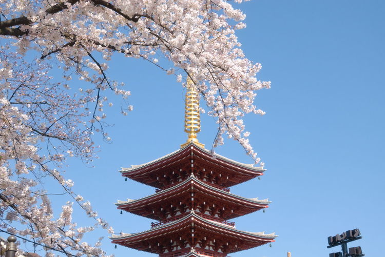 Low angle view of cherry blossoms against red pagoda