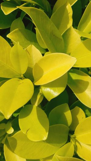 Nature , leaf