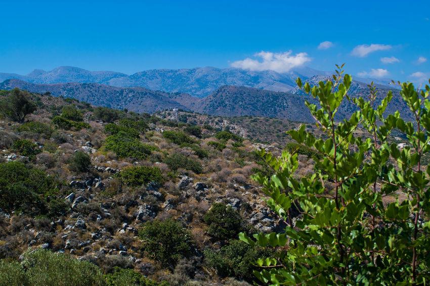 Mountain view stalis