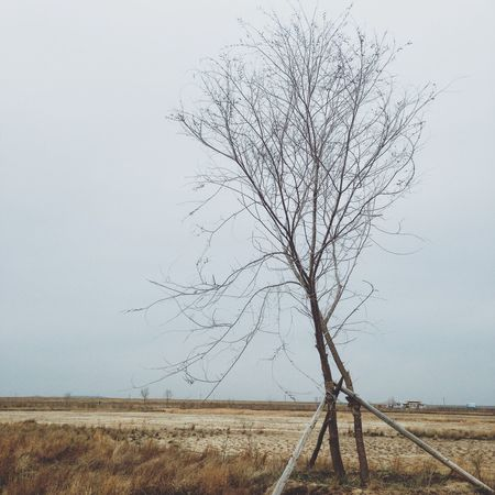 EyeEmNewHere Bare Tree Nature Tree Outdoors Scenics No People