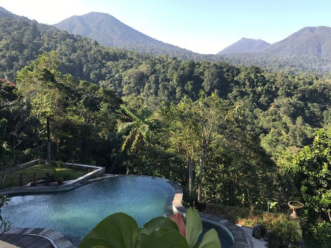 Mountain Tree Day Nature High Angle View Outdoors Beauty In Nature Tranquility Water Pool Jungle Bali INDONESIA Relaxing