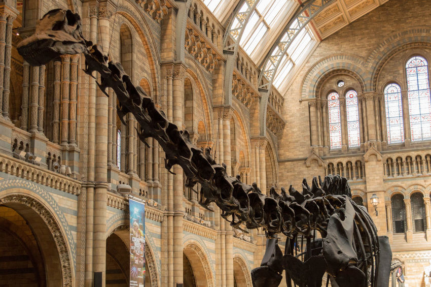 Arch Architecture Bones Built Structure Column Culture Dinosaur Dippy Dippy The Dinosaur Famous Place Fossil Historic History London Natural History Museum Old Ornate London Lifestyle
