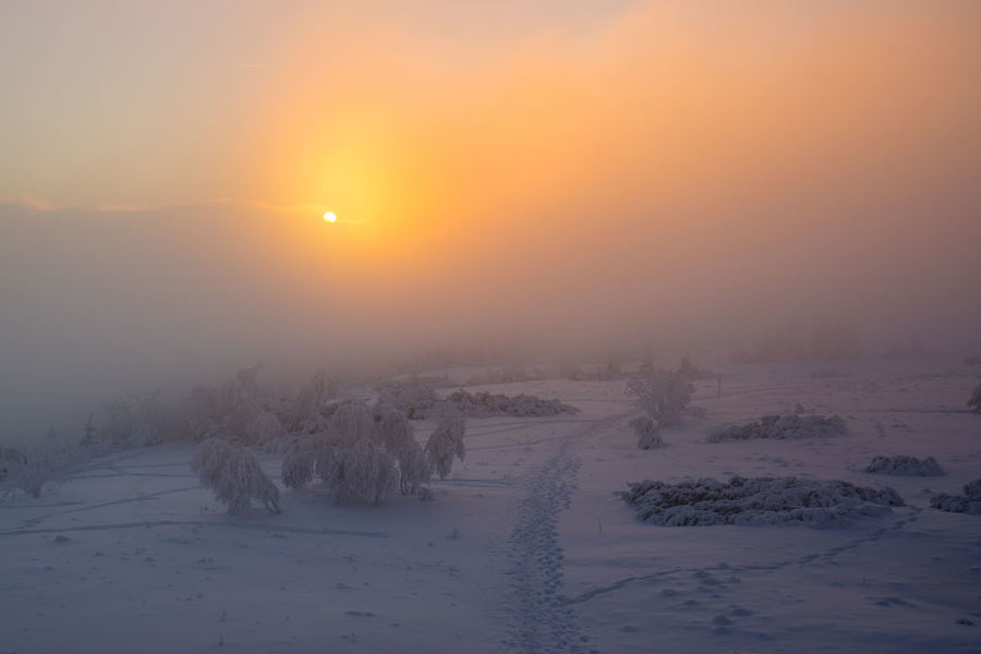Beauty Beauty In Nature Cold Temperature Day Field Fog Frozen Landscape Nature No People Outdoors Rural Scene Scenics Sky Snow Sun Sunset Tranquil Scene Tranquility Tree Weather Winter
