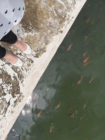 Fishy, fishy Eyeem Philippines Travellingfeet