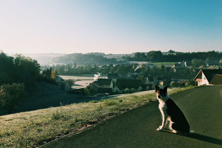 Dog sitting on road by town against clear sky