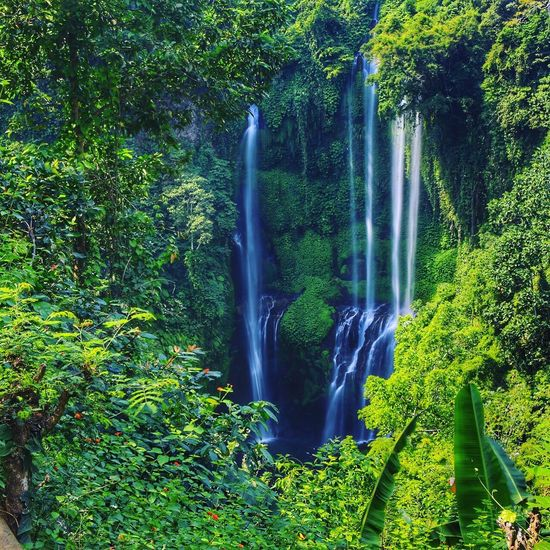 Sekumpul  Waterfall in Bali INDONESIA Nature Fresh