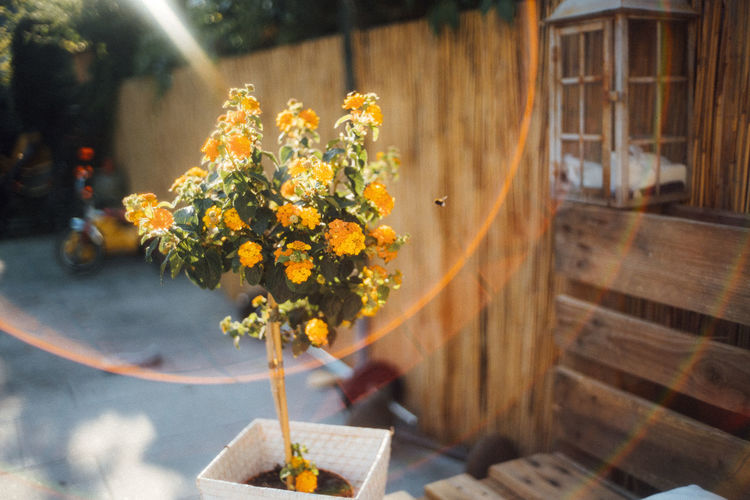Close-up of yellow flowering plant on table