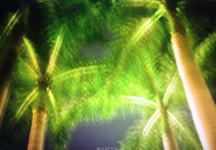Look me up in miami Growth Palm Tree Outdoors Beauty In Nature Green Color No People Day Low Angle View Tree Freshness Close-up