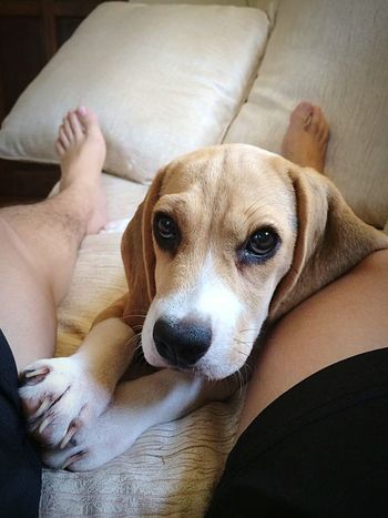 Her super powers. Melts you with those puppy eyes. Low Section Human Hand Young Women Women Lying Down Human Leg Puppy Pet Owner Canine Pampered Pets
