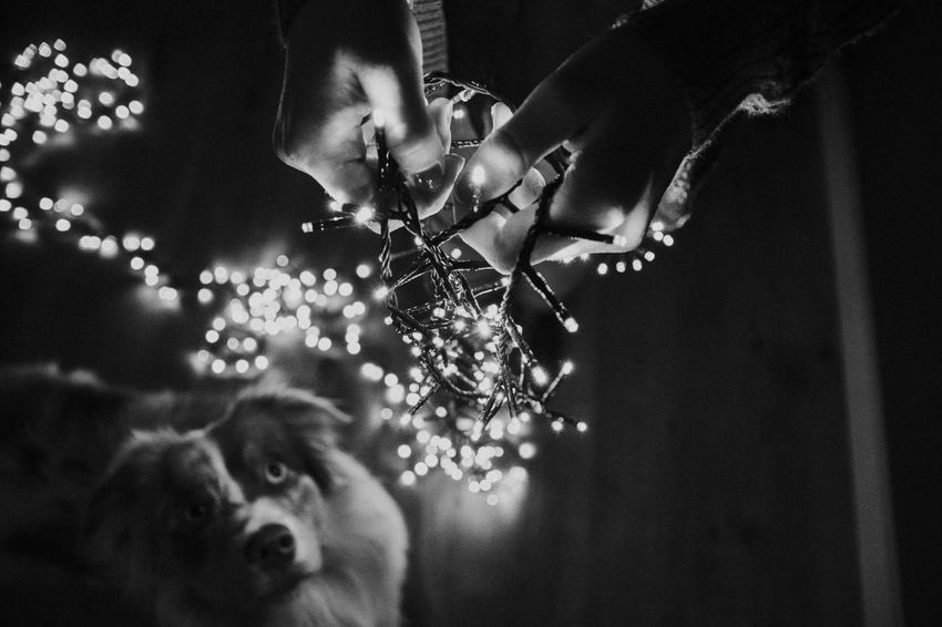 One Animal Animal Themes One Person Indoors  Mammal Always Be Cozy Real People Close-up Young Adult Nature Day People EyeEm Best Edits Hello World Check This Out Christmas Lights Christmas Tree The Week On Eyem Showcase: November The Week On EyeEm Focus On Foreground Blackandwhite Eye4photography  Black And White EyeEm Gallery