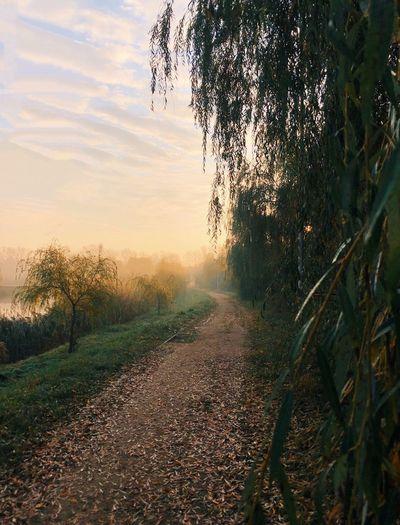 Foggy road Fog