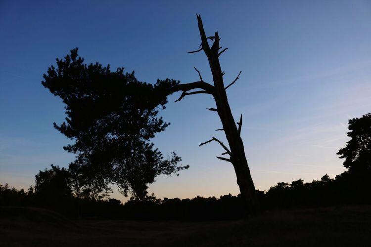 survival branch