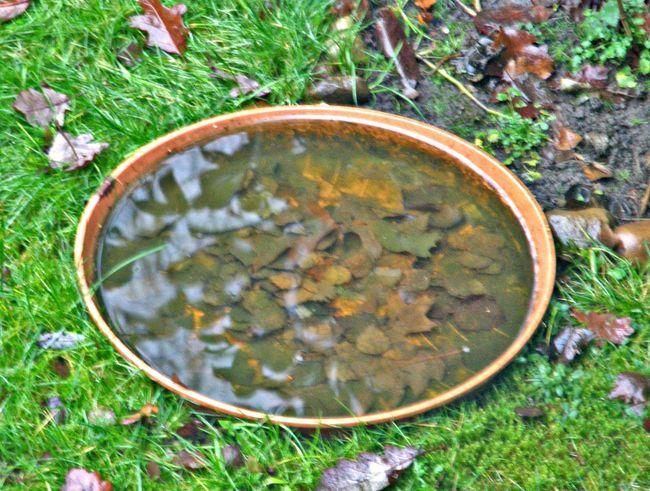 Bird Potion Sheets🍃 Grass Garden Outdoor Photography No People
