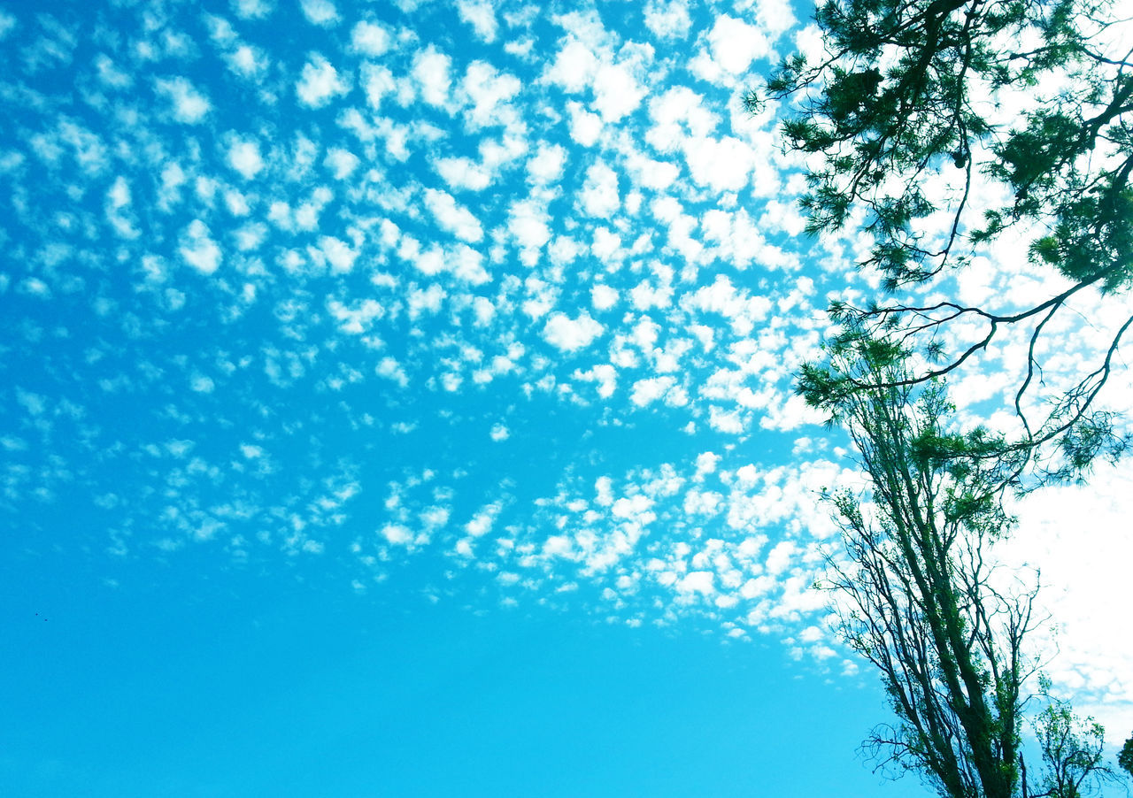 tree, low angle view, nature, growth, branch, beauty in nature, day, no people, sky, blue, outdoors, tree trunk, scenics
