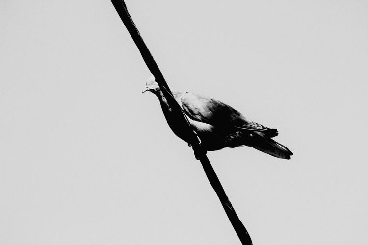 Canon 70d EyeEm The Best Shots Moment Lens My Unique Style Nature_collection 75 -300mm Hello World Bird Black & White
