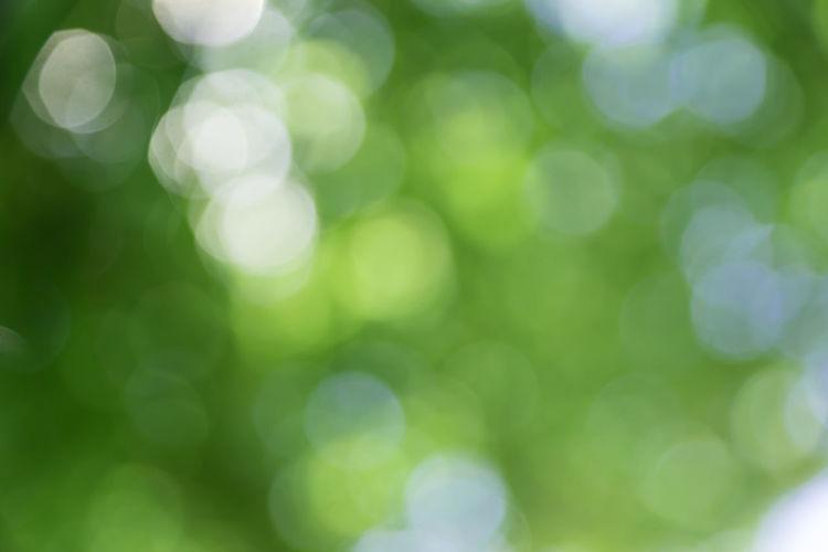 Defocused image of green leaf
