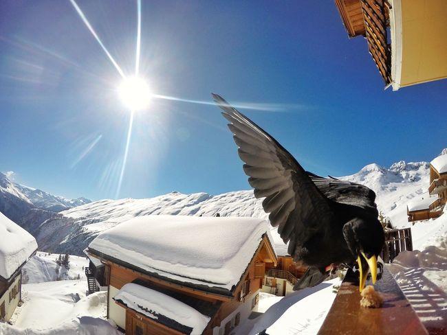 Bird Cold Temperature Sunlight Sky Winter Lens Flare Sunbeam Outdoors