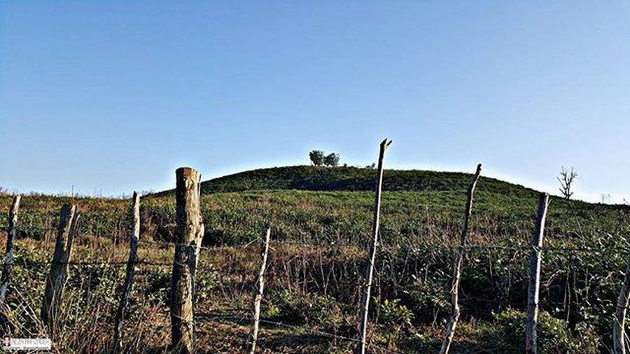 Tea bushes Tea Bushes Nature Sky Bluesky Farm Hill Iran Gilan Rasht