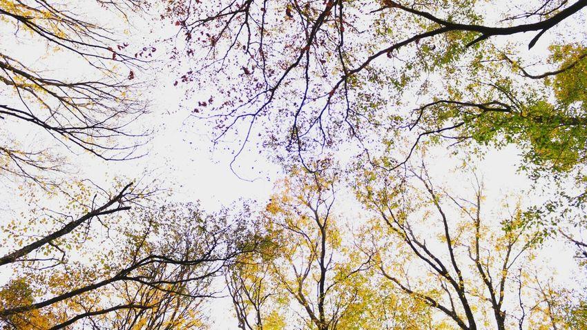 너무 좋았던.. 제주도 한라산  가을 단풍 알록달록. 겨울에 눈꽃보러 또 가야겠다.