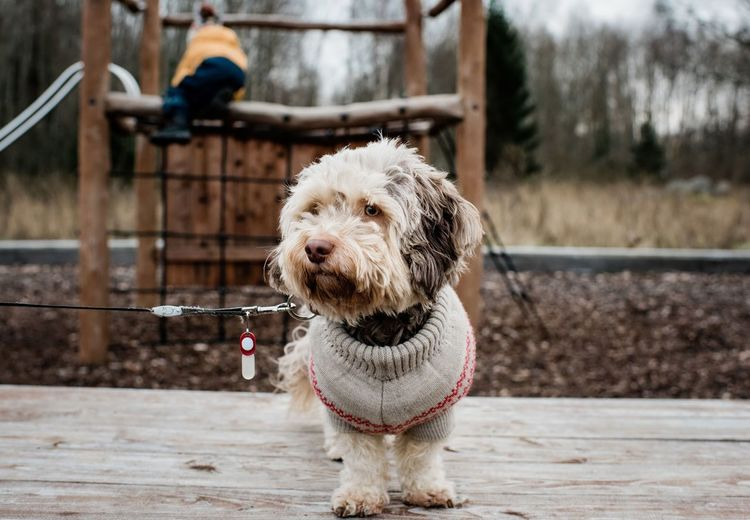 Portrait of dog standing on wood