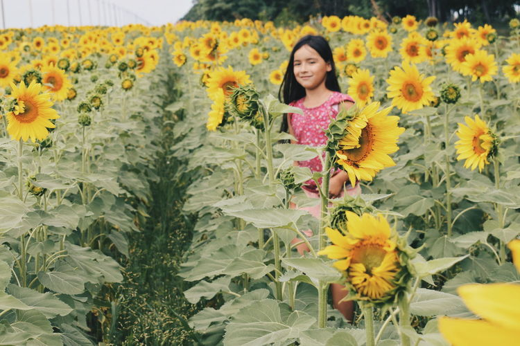 Girl standing amidst sunflowers on land