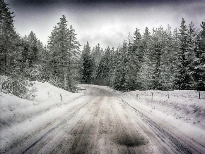 Tree Plant Snow Cold Temperature Winter Beauty In Nature Transportation The Way Forward Direction Sky No People Road Nature Tranquil Scene Tranquility Land Scenics - Nature Forest Covering Pine Tree Coniferous Tree