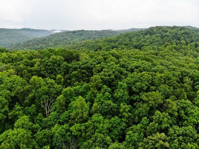 Aerial View Aerial Shot Aeriel Photo Mavic Air Dronephotography Forest Photography Trees Treelines Textures and Surfaces Texture Textured  Green DJI X Eyeem Tea Crop Tree Tree Area Agriculture Forest Sky Green Color Plant Photosynthesis Grove Relaxed Moments Delicate Pine Woodland Glade