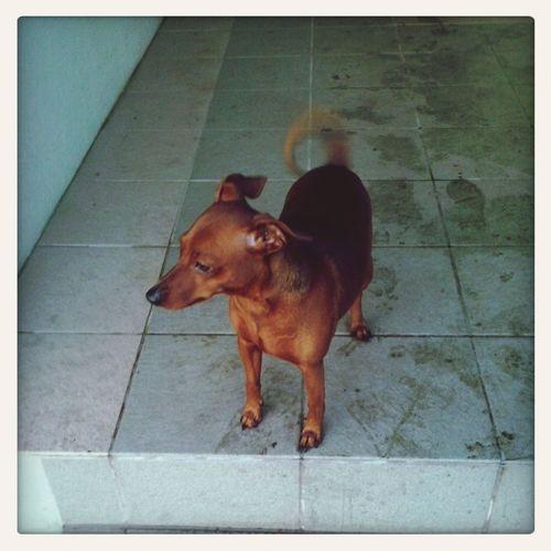 my doggy Little Cute♡ Boy Love