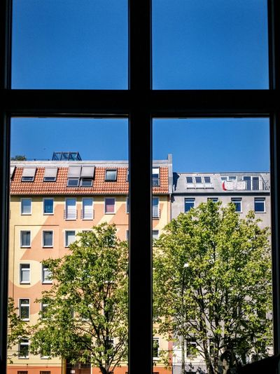 Trees and buildings against blue sky seen through window