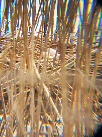 oeufs de poule d eau au lac bleu a beaumont sur oise Backgrounds Full Frame Palm Tree Close-up Plant