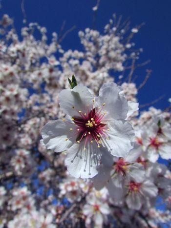 Spring Flowers Streamzoofamily Beautiful
