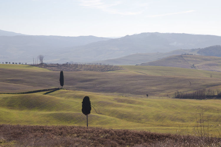 Pienza Tuscany Cypresses Val D'orcia Landscape Environment Mountain Scenics - Nature Beauty In Nature Tranquil Scene Tranquility Land Field Sky Non-urban Scene Nature Grass Day Plant Mountain Range Rural Scene Agriculture No People Idyllic Outdoors Rolling Landscape