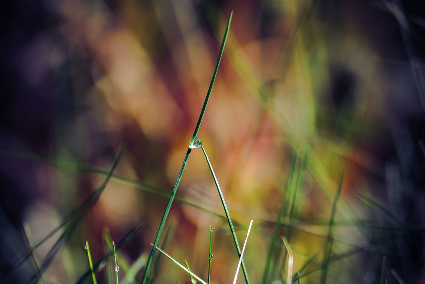 Focus On Foreground Plant Close-up Growth Nature Selective Focus Beauty In Nature No People Day Tranquility Water Outdoors Drop Green Color Wet Fragility Grass Vulnerability  Plant Stem Blade Of Grass RainDrop Balance Waterdrops