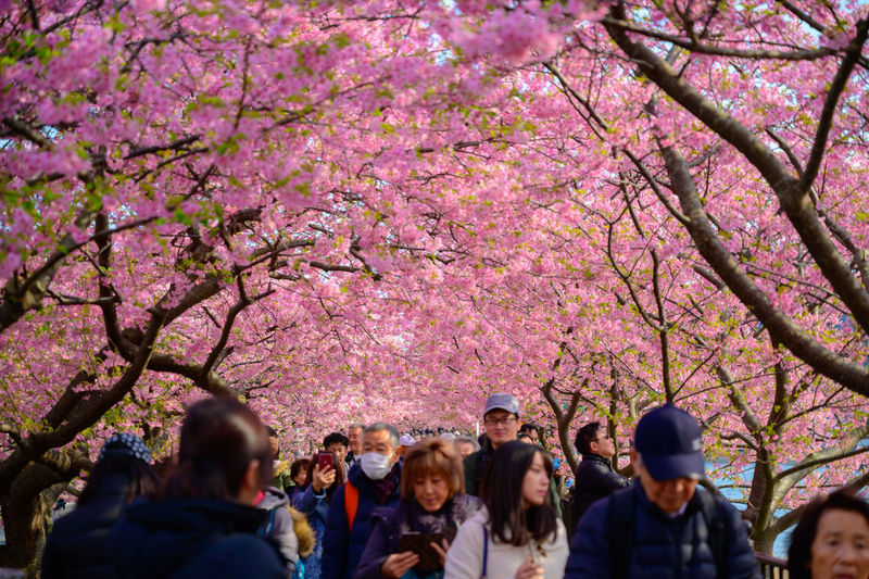 Group of people on cherry blossom tree