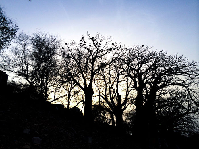 Africa Africa Collection Beauty In Nature Birds Dakar Day Goree Island Goreeisland2016 Gorée Growth Nature No People Outdoors Scenics Senegal Silhouette Sky Sunset Tranquil Scene Tranquility Tree
