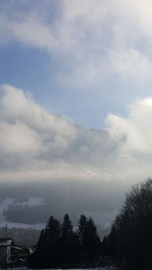 Tree Cloud -