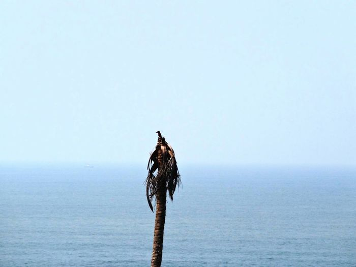 Bird on wooden post by sea against clear sky