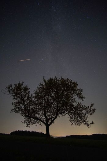 Silhouette tree on field against sky at night