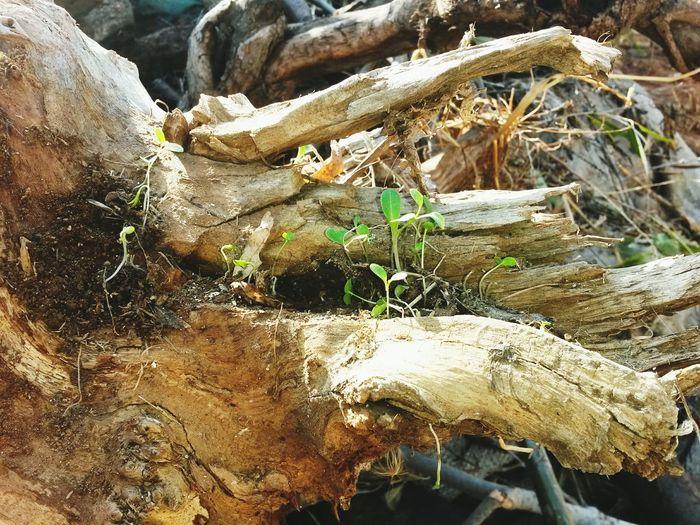 Hi Enjoying Life Life Wood Block Herb Survivalskill