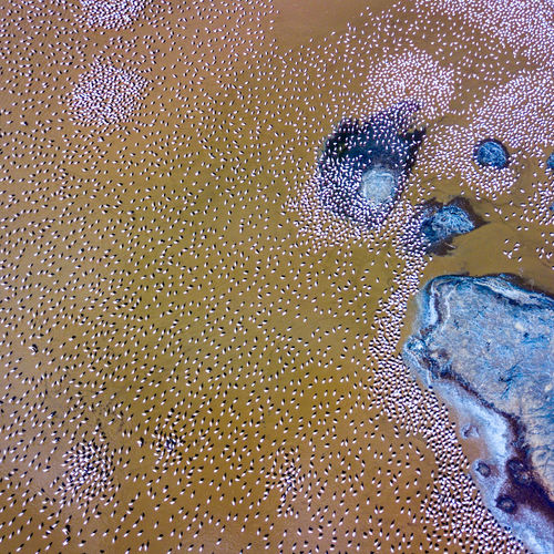 Flamingos in Lake Bogoria, shot using Dji Mavic Pro Backgrounds Full Frame Pattern Textured  Abstract Window Multi Colored Seamless Pattern Close-up First Eyeem Photo