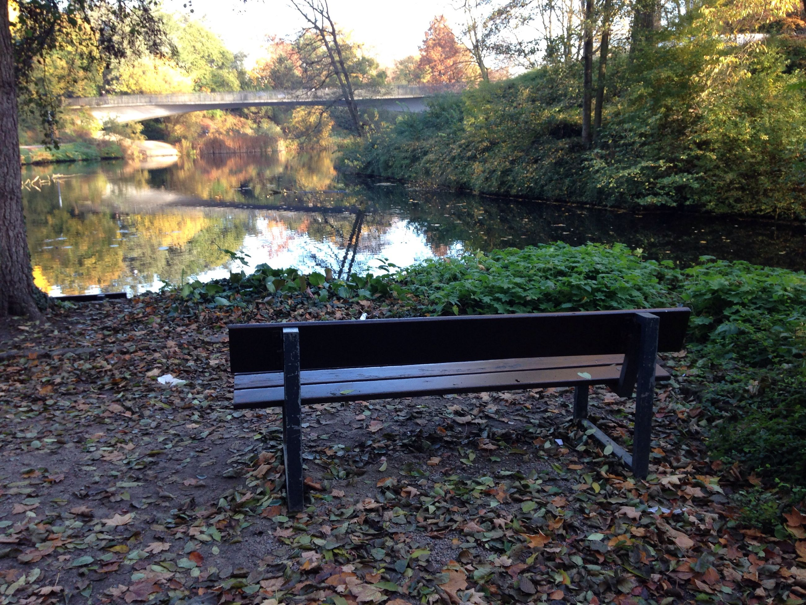 tree, tranquility, water, bench, abandoned, autumn, reflection, nature, absence, empty, leaf, day, lake, tranquil scene, no people, growth, outdoors, forest, plant, wood - material