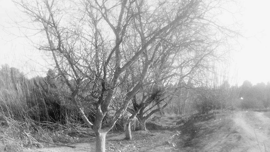 Taking Photos Relaxing Arboles , Naturaleza Nature Nature Photography Blackandwhite Nature_collection Hugging A Tree