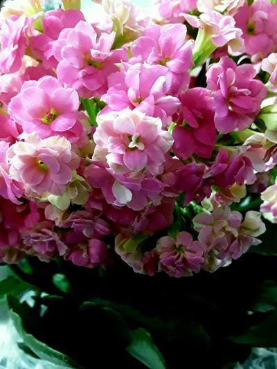 Kalandiva Flower Fragility Beauty In Nature Close-up No People Freshness
