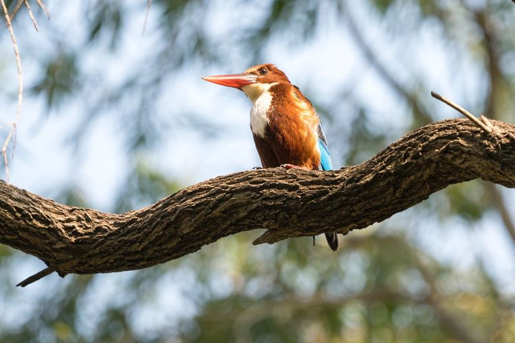 Sigma 150-600c Sony A7RII Tsing Yi Hong Kong Kingfisher Bird Kingfisher Animals In The Wild Animal Themes One Animal Bird Tree Perching Animal Wildlife Branch Focus On Foreground Low Angle View Day No People Nature Outdoors Close-up Beauty In Nature