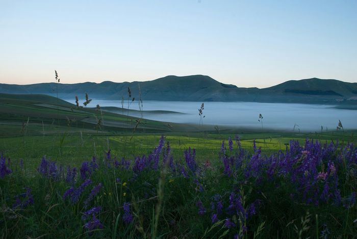 Mountains Montisibillini Castelluccio Italy Fog Violet Flowers Colors Foggy Morning Green Nofilter