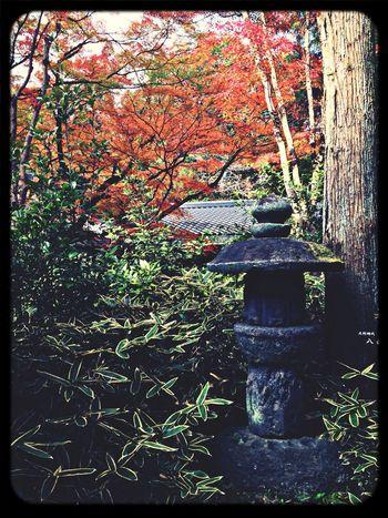 Temple Japanese Garden Red Leaves Stone Lantern
